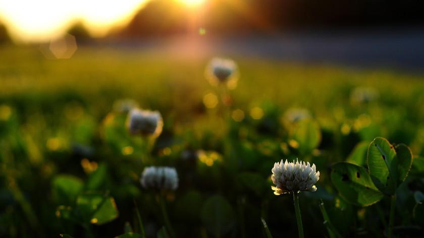 Sunrise-Pictures